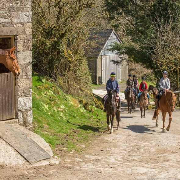 Dartmoor-Pony-Trekking-Babeny-Farm-Near-Appledore-Park-Campsite-Devon